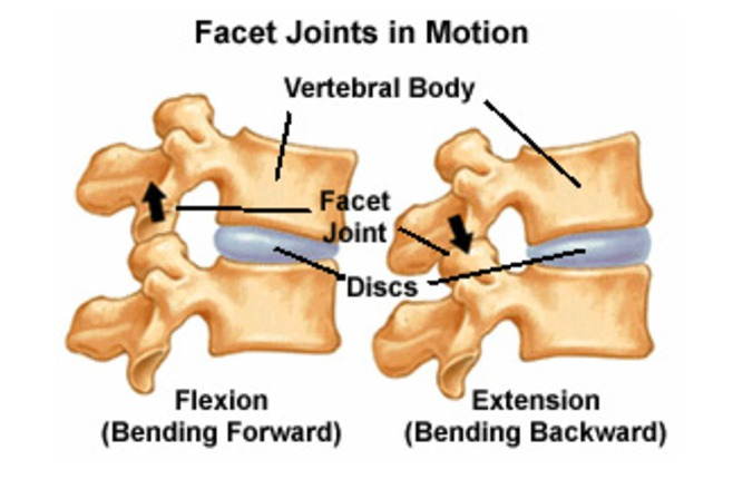 Facet joints anatomy