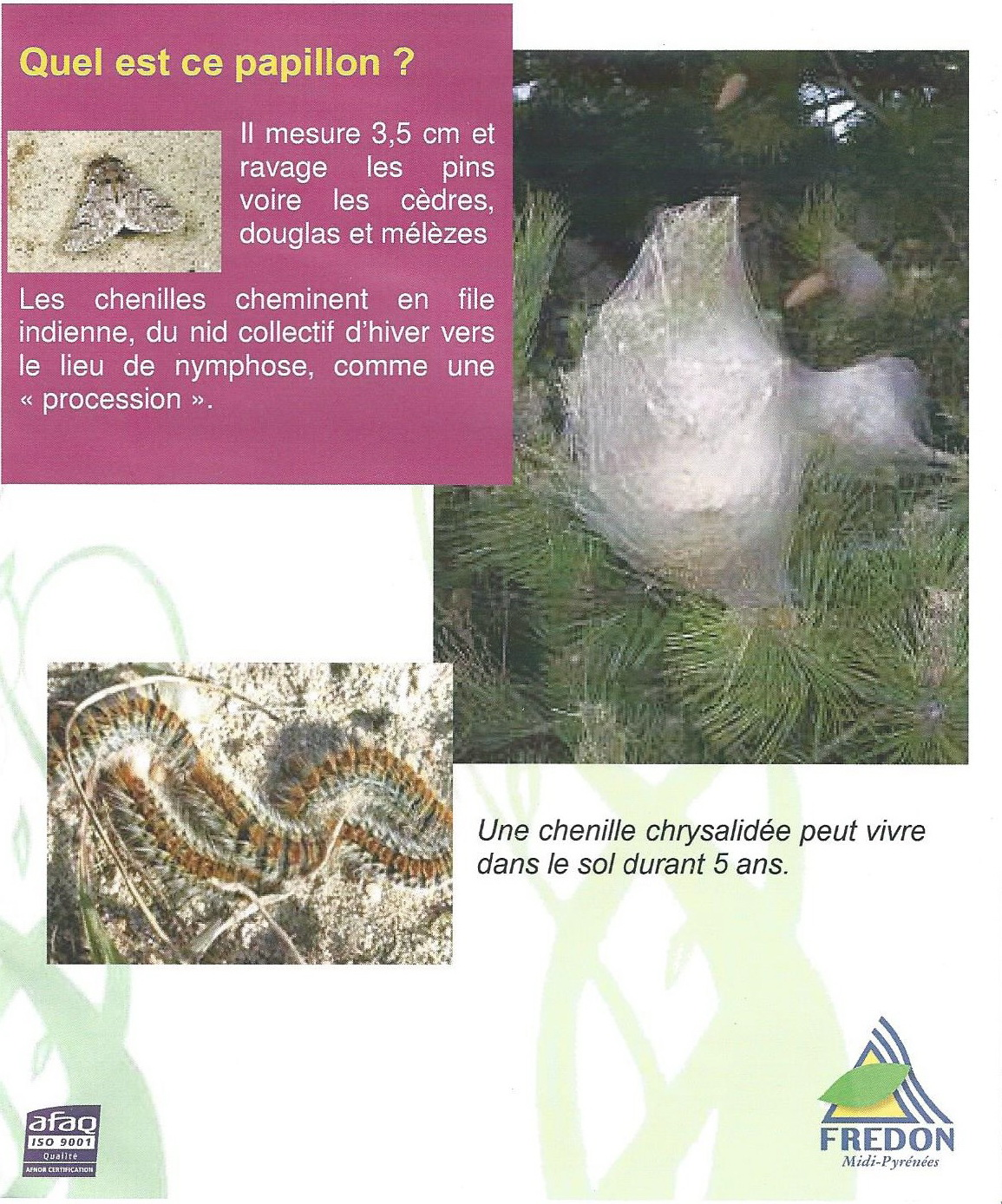 FOREST : chenille processionnaire