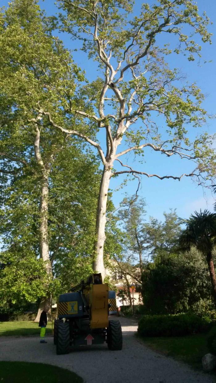 arbre seysses demontage forest