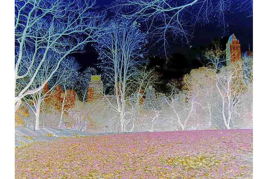 New York Cenral Park