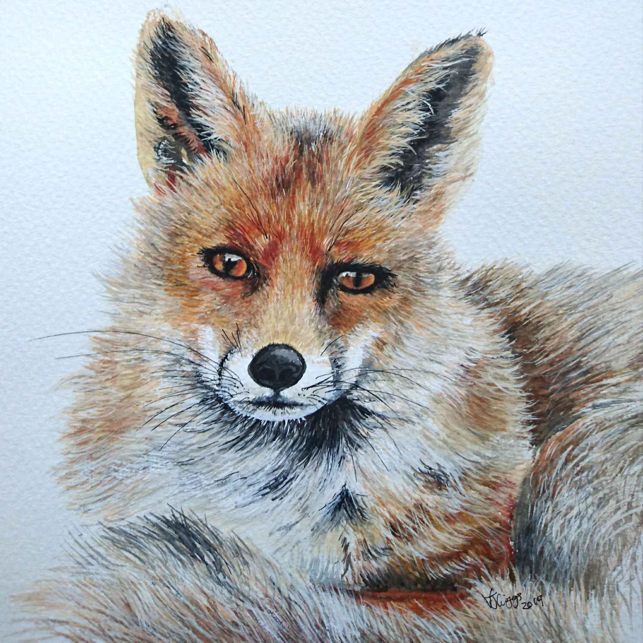 Fox 15