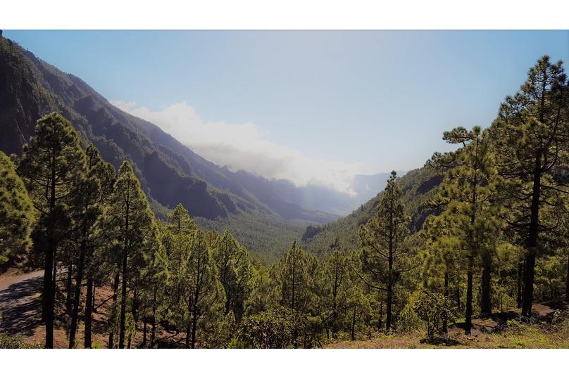 Valle de pinos desde La Cumbrecita