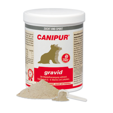 canipur -gravid