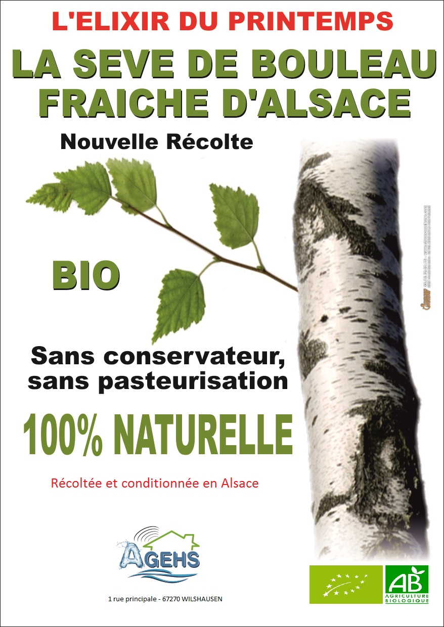 seve de bouleau fraiche et 100% naturelle (livraison comprise)