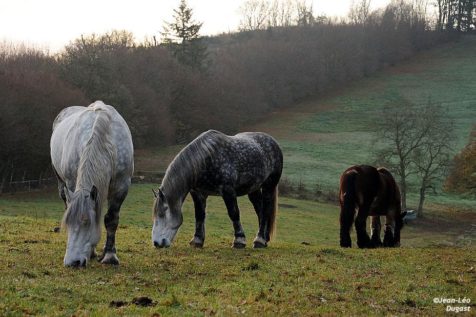 Rocco, Tisis et Quiri
