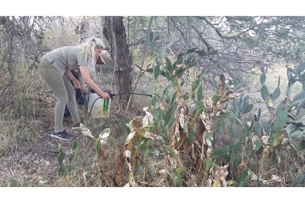 conservation, africa, kruger, alien plant removal