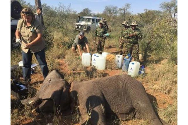 TA, Balule, conservation, Black Mamba APU, SA