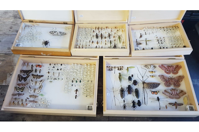 Bugs. insects, cases, collection, research