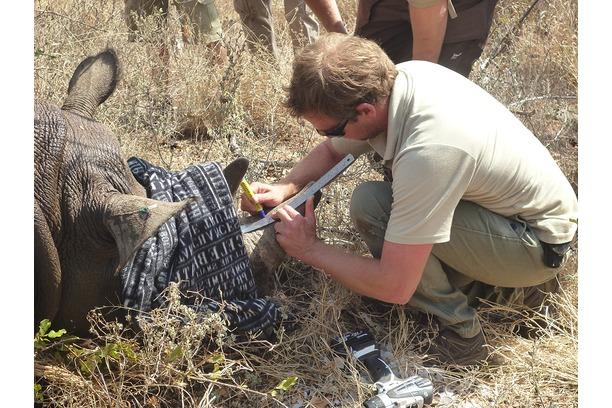 Rhino, anti poaching, Balule, Conservation, Kruger