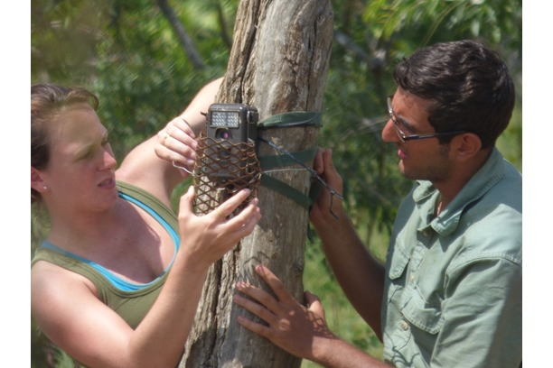 wildlife, conservation, camera traps, balule