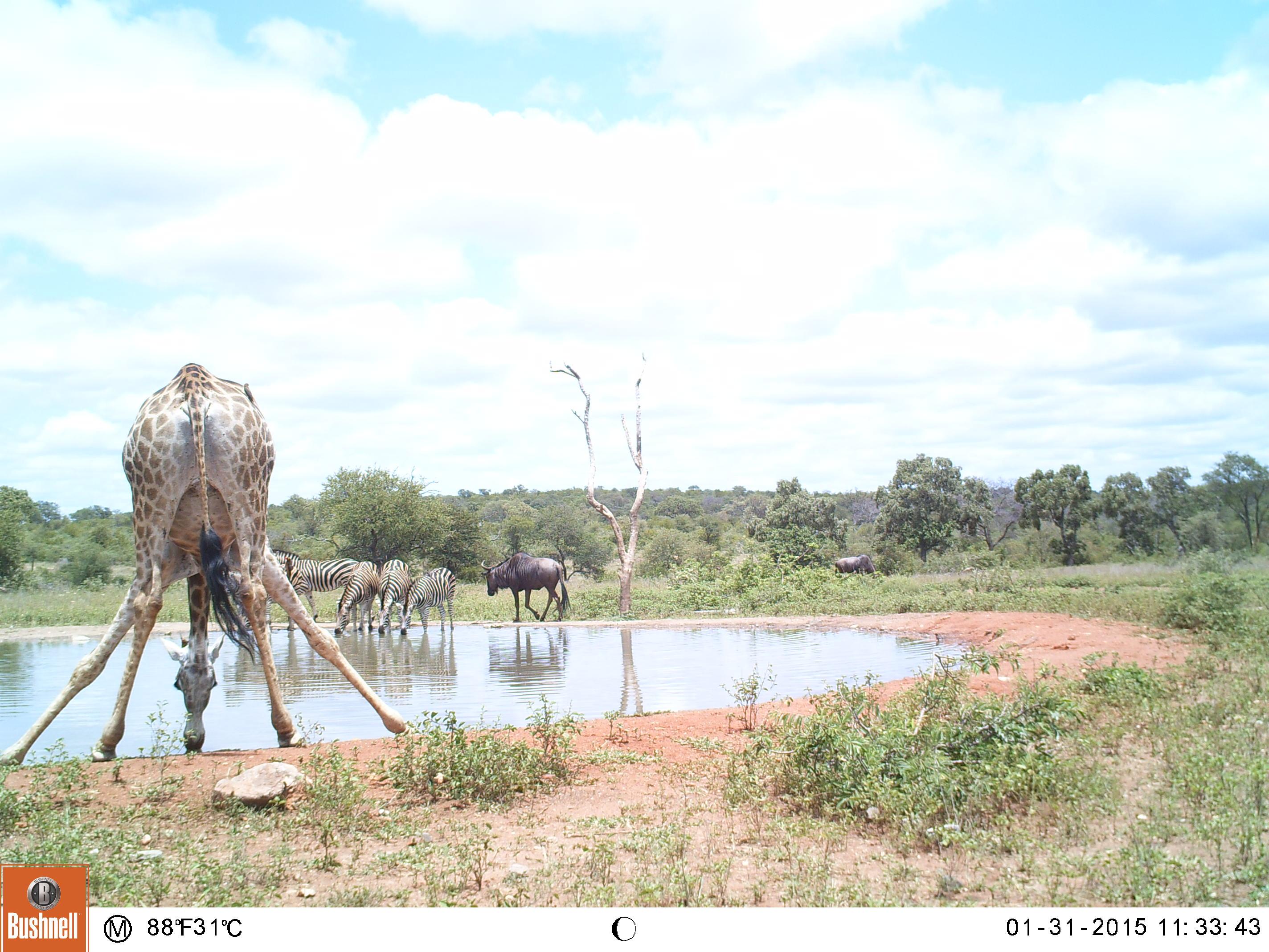 wildlife conservation, kruger, camera trap, africa
