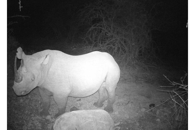 Rhino, SA, Balule, Volunteer, conservation