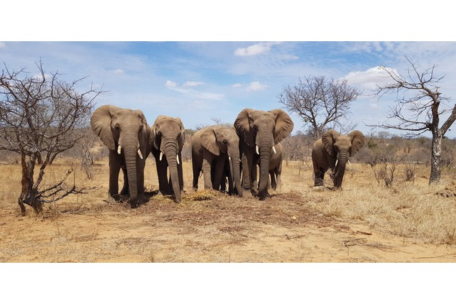 South Africa, Elephants, herd, volunteering