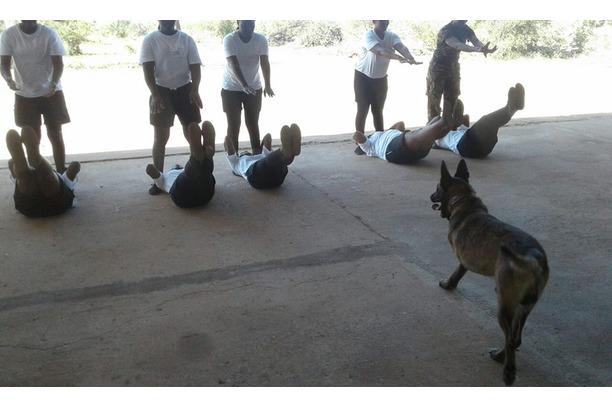 Shaya, Black Mambas, Balule, Conservation, SA