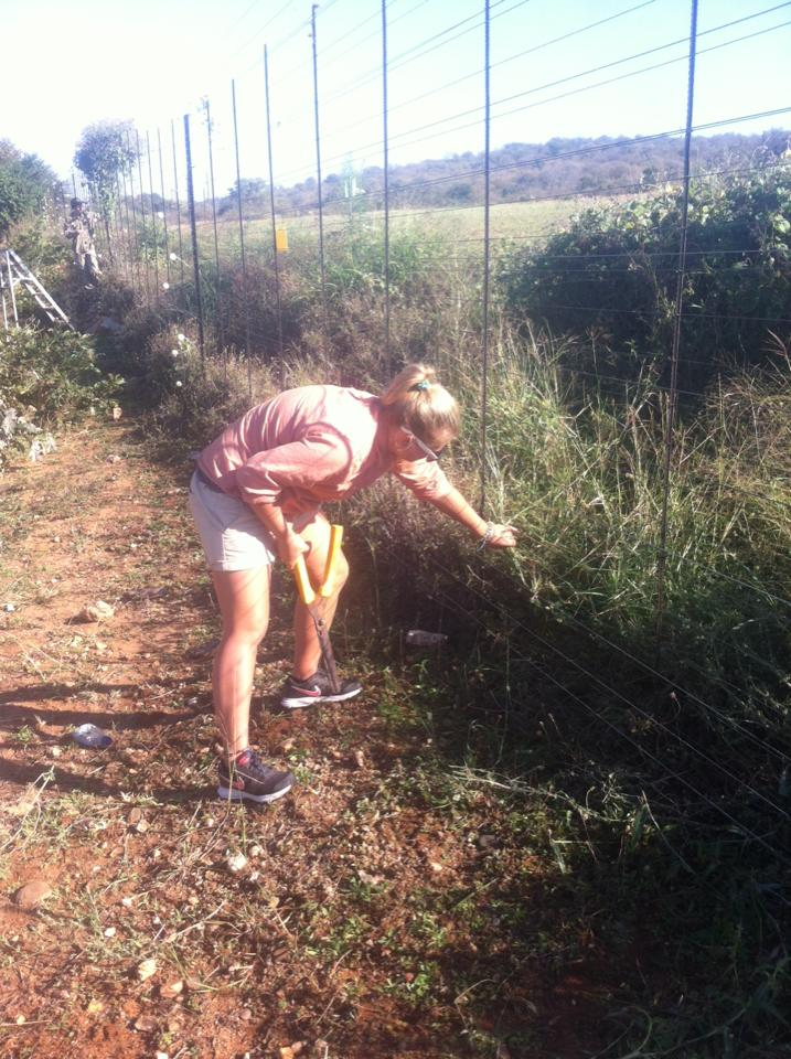 Conservation volunteers fixing fences in Africa.