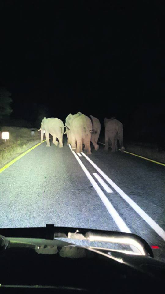 Hoedspruit, Balule elephants escape