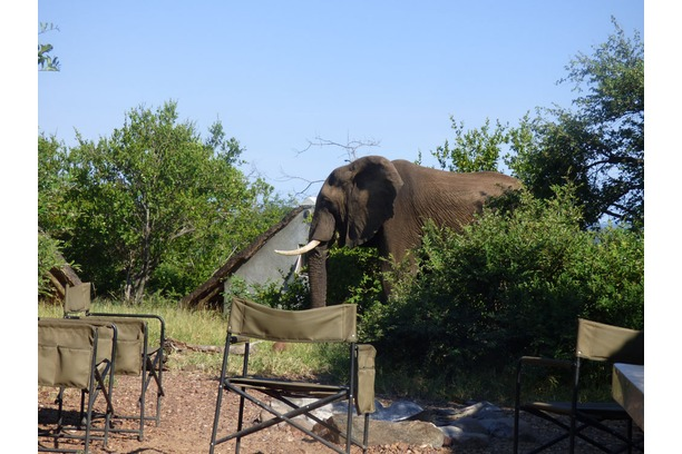 dry season, research camp, south africa, elephant