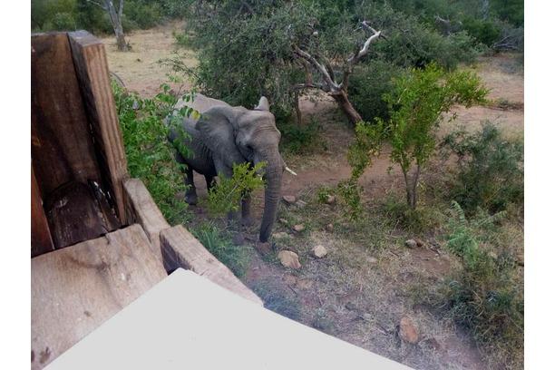 elephants, greater kruger, conservation, balule