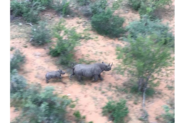 Rhino, Black Mamba APU, Afreco, Balule, Volunteer