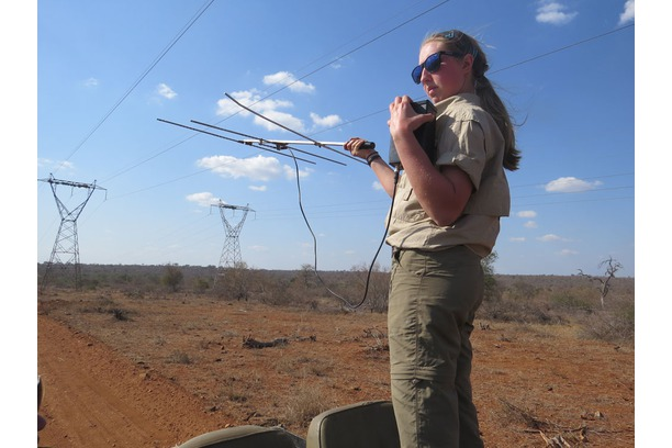Telemetry, Balule, tracking, Greater Kruger