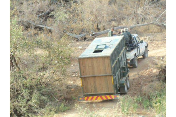 Rhino, rescue, relocation, anti-poaching, kruger