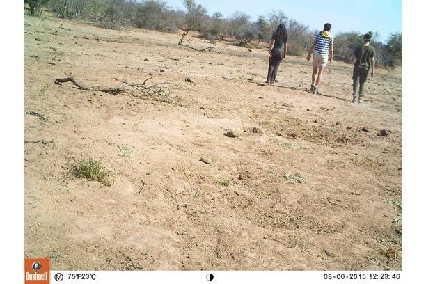 camera trap wildlife surveys in greater kruger