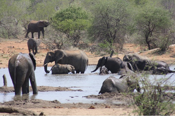 Elephants cooling in water hole, Kruger, S. Africa