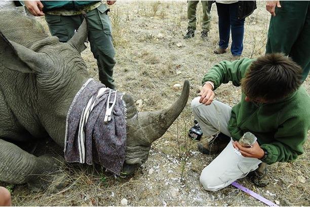 anti-poaching, rhino, monitoring, kruger park