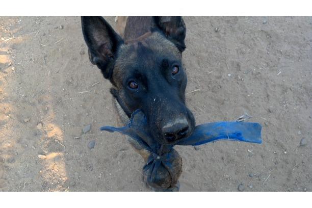 tracking dog, anti-poaching, rhinos, kruger