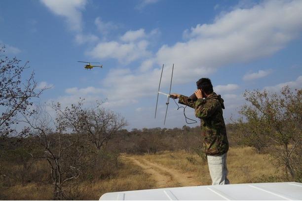 rhino monitoring, anti-poaching, kruger, conservat