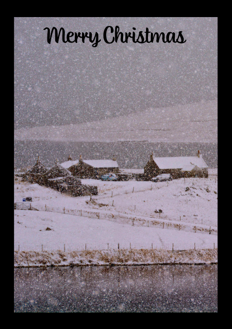 Shetland on Canvas Christmas Card Pack
