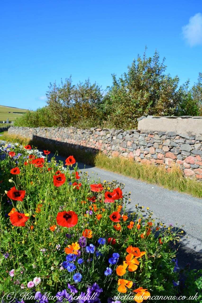 Roadside Poppies at Hillwick