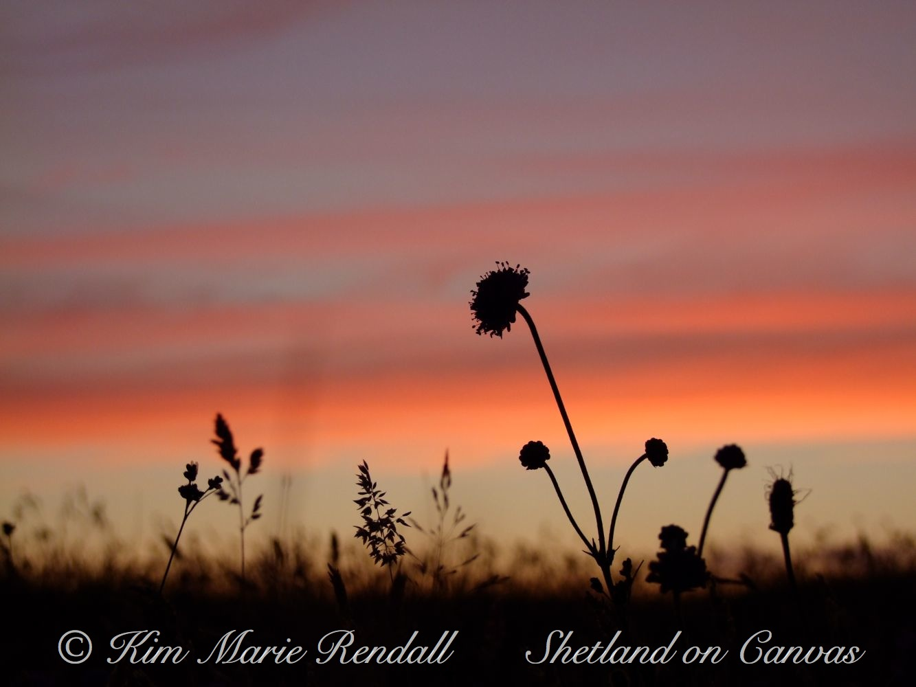 Wildflower Silhouette at North Nesting (1)