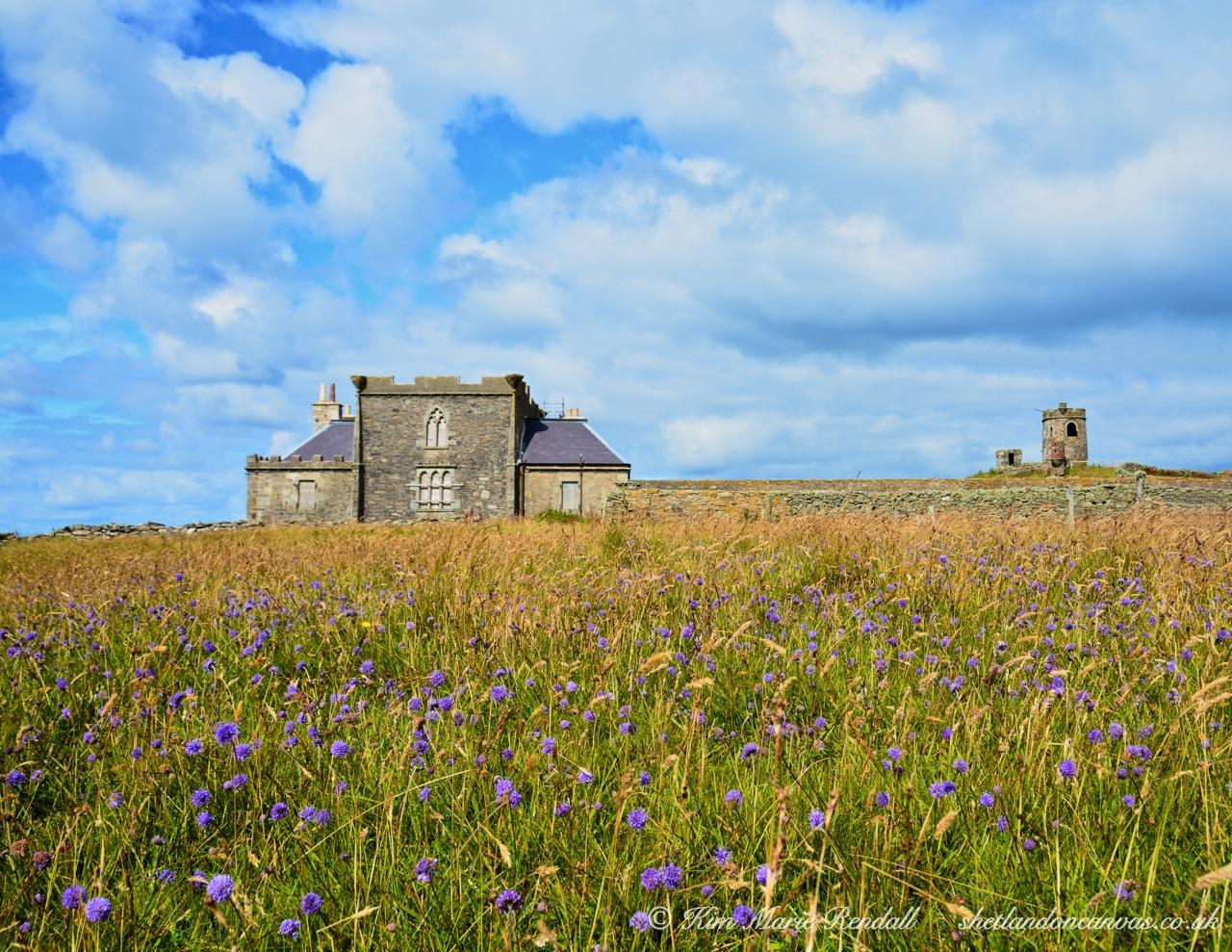 Wildflowers at Brough Lodge, Fetlar