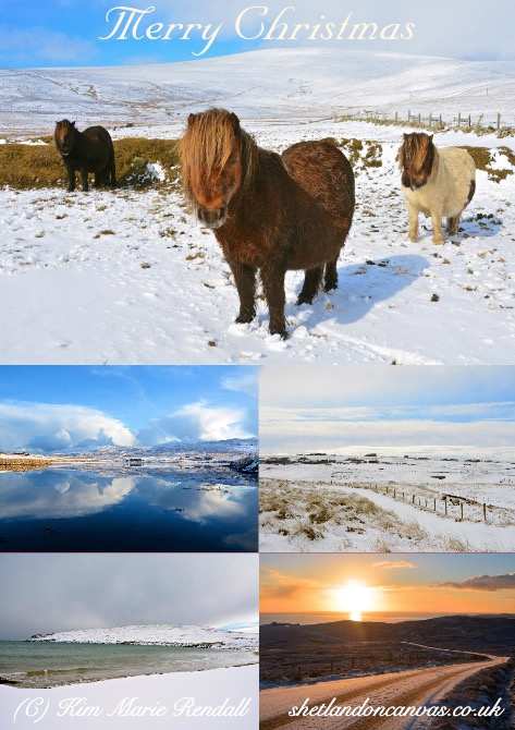 Shetland on Canvas Christmas Card Variety Pack