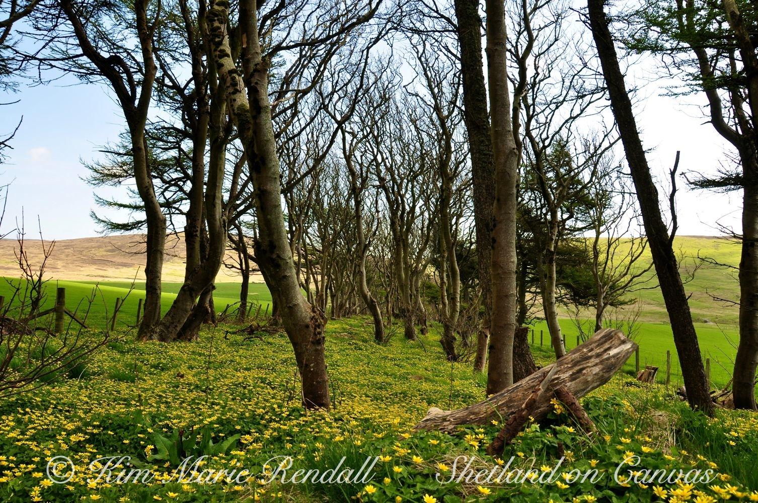 Kergord in Spring (2)
