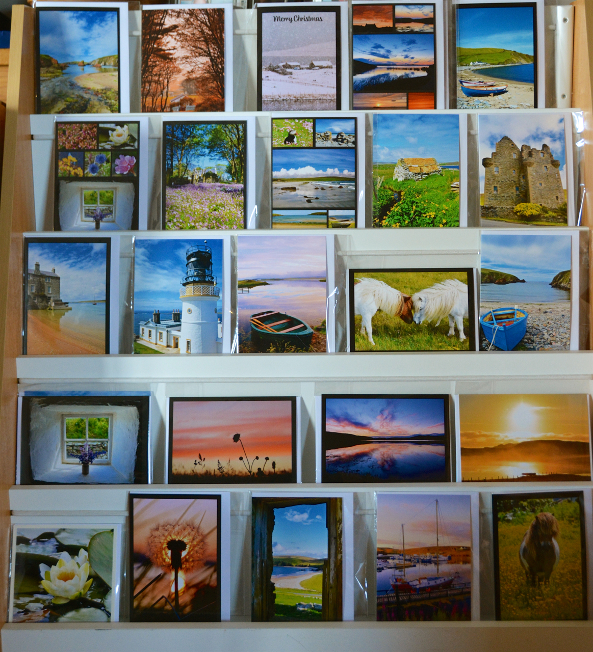 Shetland on Canvas Greeting Card Variety Pack