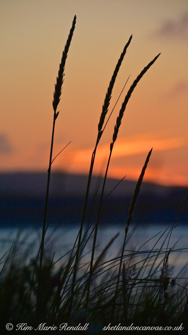 Long Grass at Sunset, West Voe Beach, Sumburgh