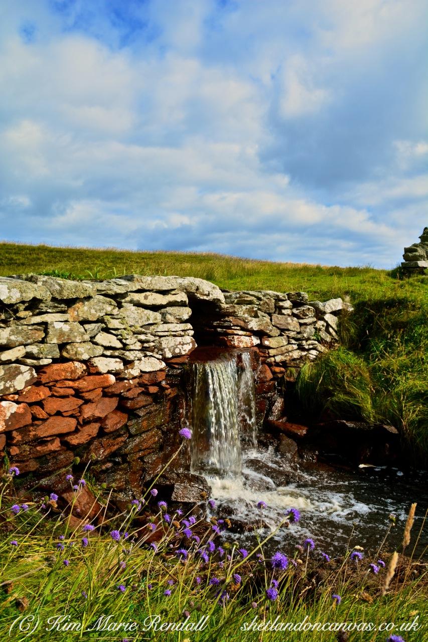 Wildflowers at Brough Burn, Fetlar