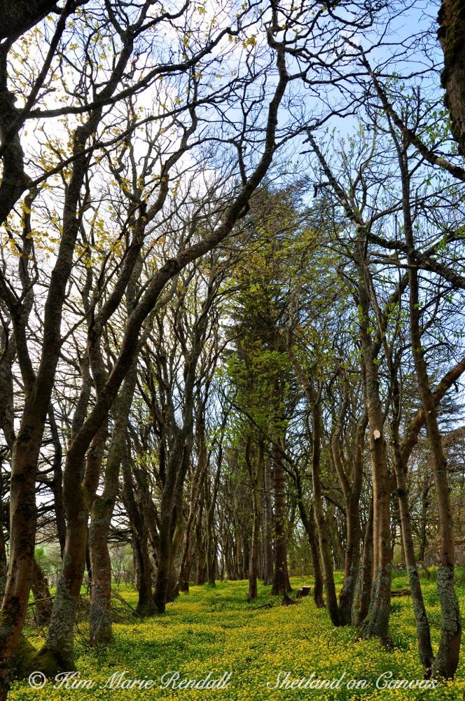 Kergord in Spring (1)
