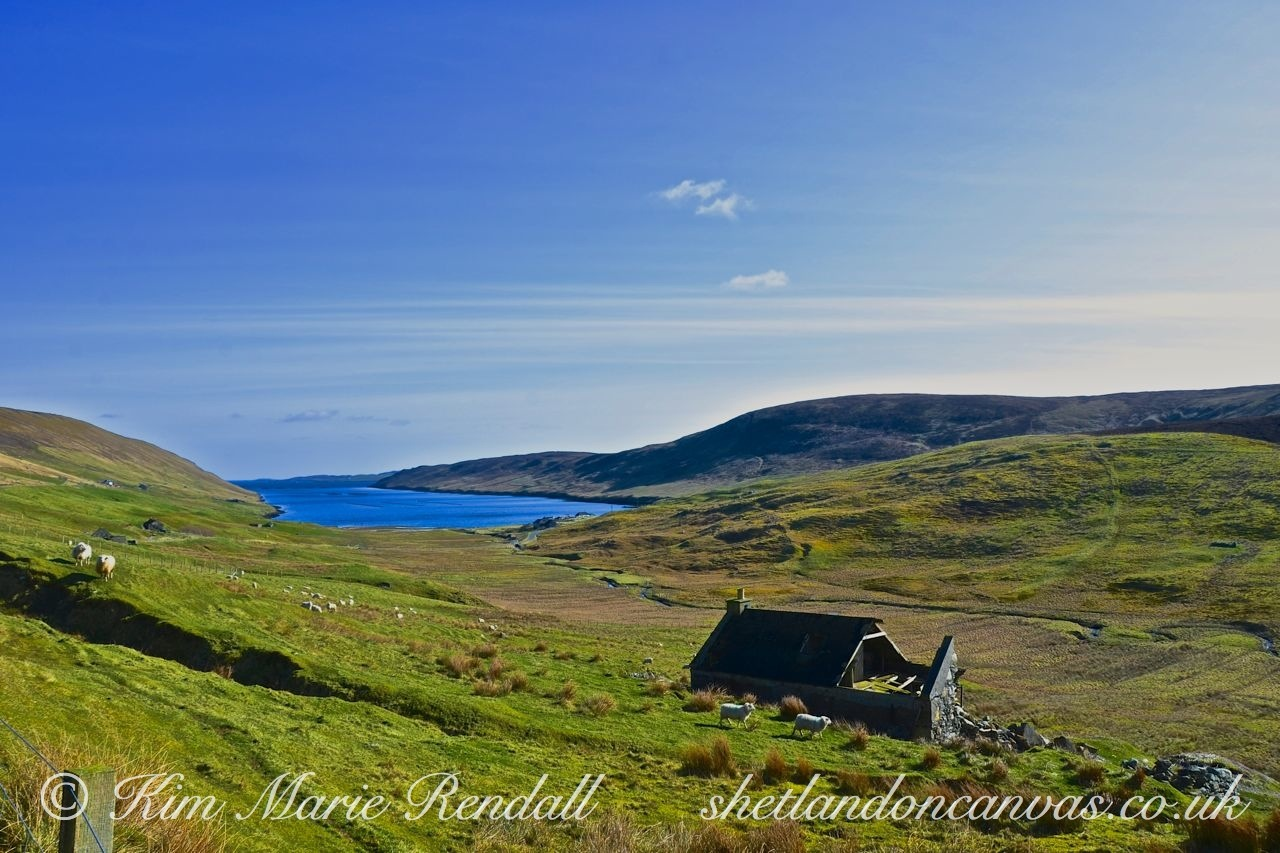 Spring day at Collafirth, Delting