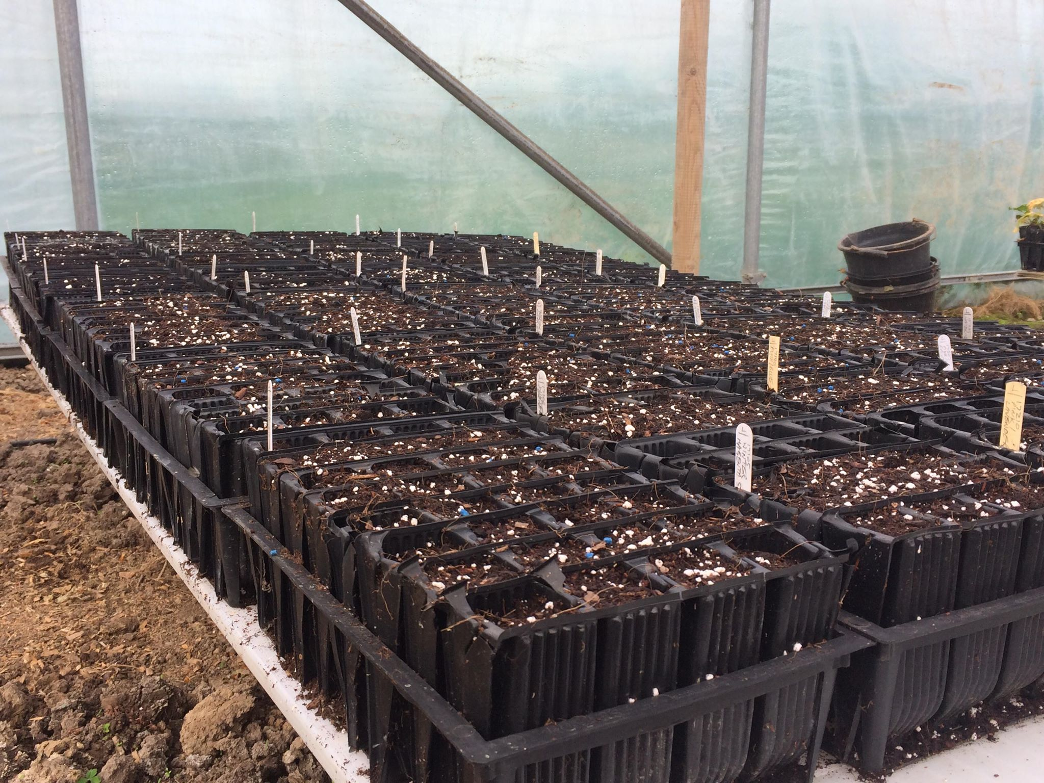sowing beds
