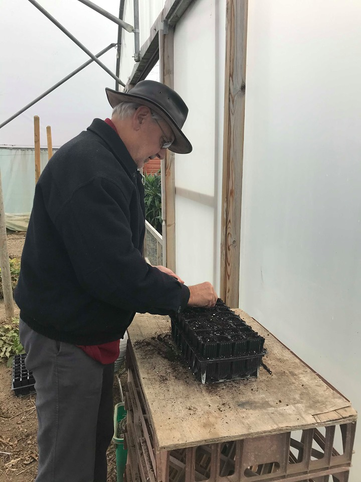 Roger sowing seeds