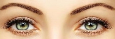 Eye Lash and Brow Course