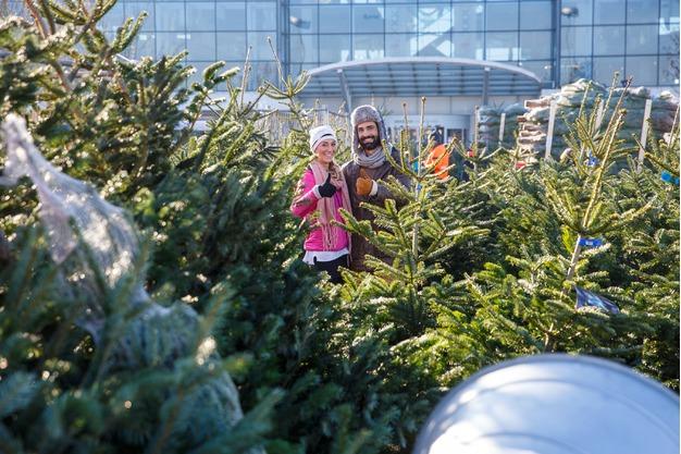 Weihnachtsbäume Regensburg: wunderschöne Kulisse