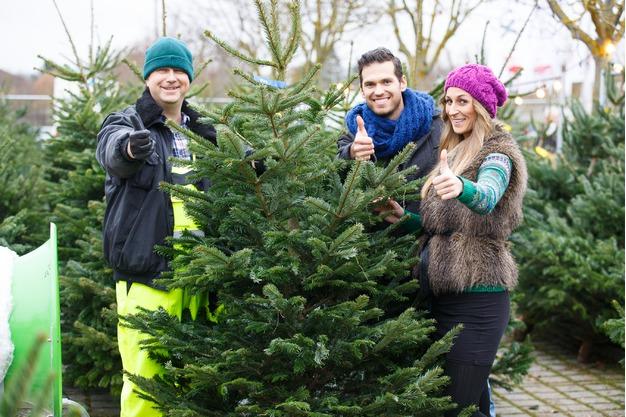 Wir lieben Weihnachtsbäume