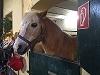 Mögliche einmalige Unterstützung für ein Pony/Pferd