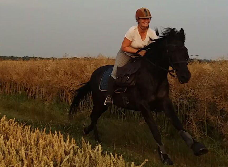 Ausritt für erfahrene Reiter