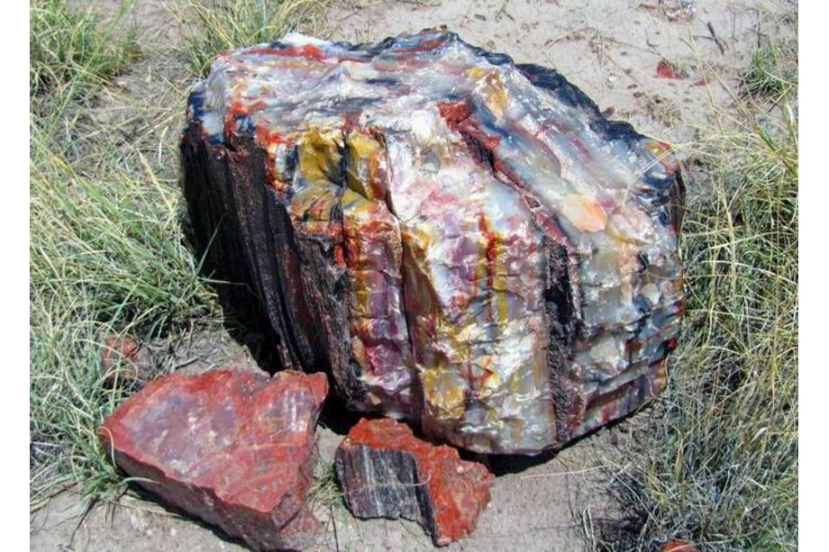 Petrified Forest National Park Arizona