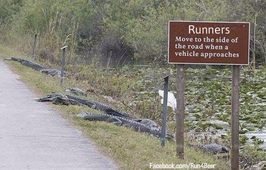 Floride alligators le long de route